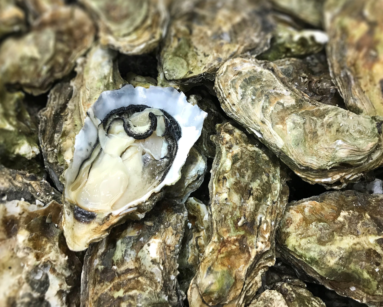 seafood-oysters